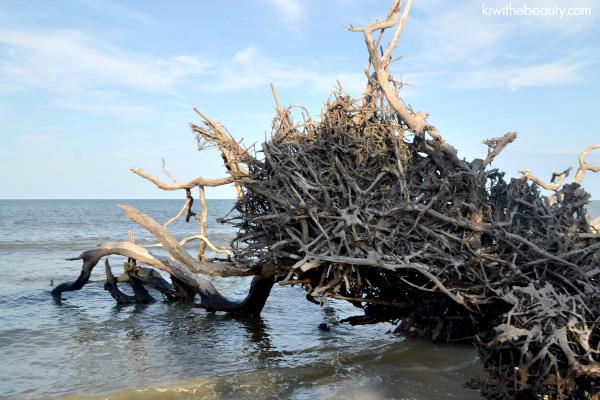 jekyll-island-truffle-dinner-kia-sorento-blog-review-kiwi-the-beauty-32